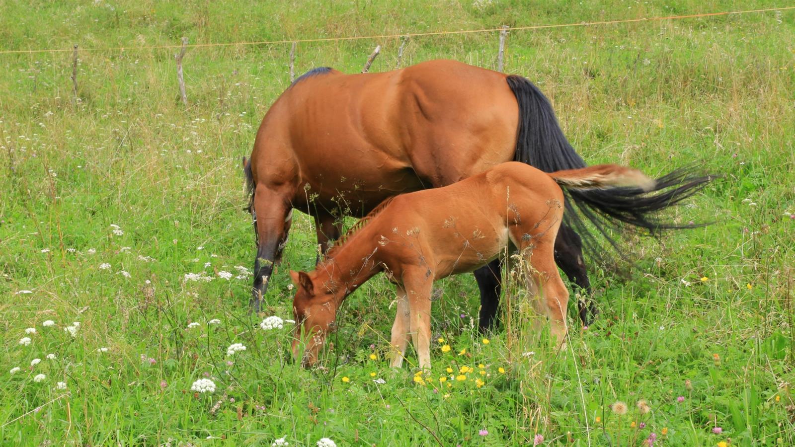 Marina il cavallo e lo stallone pt6 - 2 6