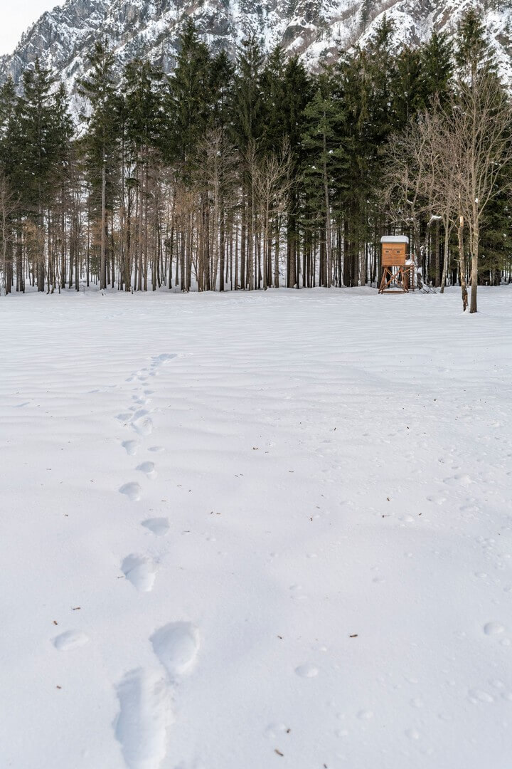 La Montagna E La Neve A Quattro Passi Da Casa I Boschi Di Tanamea
